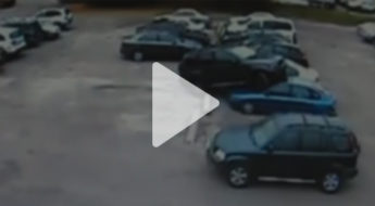 parkingfail-video